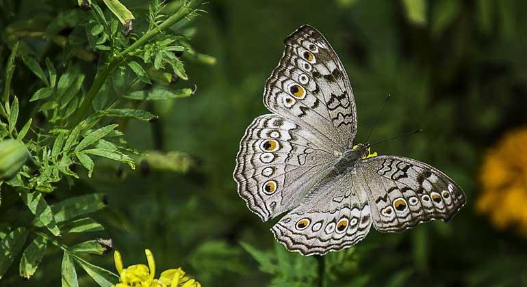 Biodiversitätskrise: Expertinnen und Experten zeigen Handlungsoptionen auf