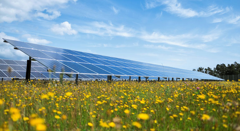 Solarparks schaffen einen Mehrwert für Flora und Fauna