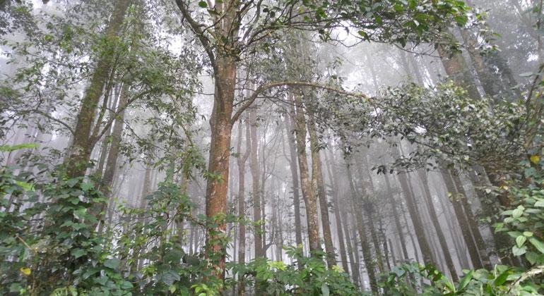 pxhere | justps2 | In Indonesien, Kambodscha, Myanmar, Malaysia und Thailand ist der Waldverlust im März 2020 deutlich höher als in den Jahren 2018 und 2019. Sofern Daten vorhanden sind (Indonesien, Malaysia), gilt dies auch für das Jahr 2017. Im Vergleich zum Durchschnitt der drei März-Monate 2017–2019 stieg der Waldverlust im März 2020 in Malaysia um fast 70 Prozent an. In Indonesien und Myanmar sind es 130 Prozent, in Kambodscha 190 Prozent. Mehr als vervierfacht haben sich die Verluste in Thailand. In China hingegen lag der Wert zwischen dem sehr hohen Wert von 2018 und dem relativ niedrigen Wert im Jahr 2019.