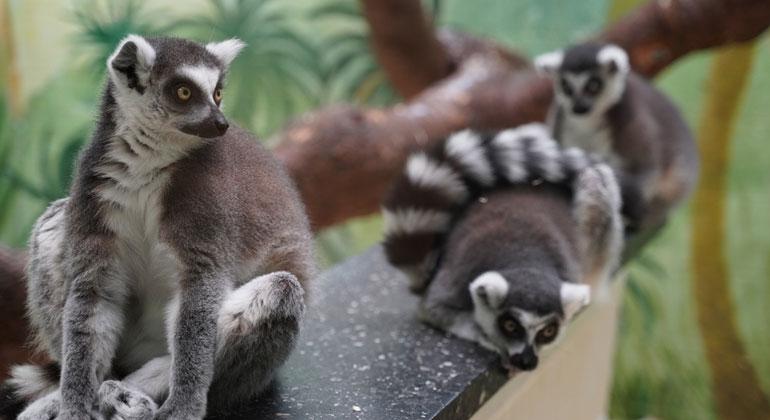 ZDF | Tiemo Fenner | Sie sind bunt, niedlich und - gefährlich: exotische Wildtiere. Auch Affen landen in deutschen Wohnzimmern.