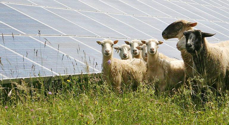 citysolar | Mit Photovoltaik-Anlagen, die ebenerdig auf einer freien Fläche aufgestellt werden, können neben der extensiven Bewirtschaftung mit Weidetieren zahlreiche weitere Vorteile, wie beispielsweise für Landwirte eine zusätzliche Einkommensquelle, geschaffen werden.