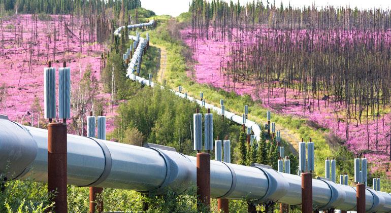 Craig McCaa/BLM Alaska / Flickr / CC BY 2.0 | Trans-Alaska-Öl-Pipeline durch zerstörten Wald: Der Weg aus der Klimakrise führt nicht über Öl- und Gas-Pipelines.
