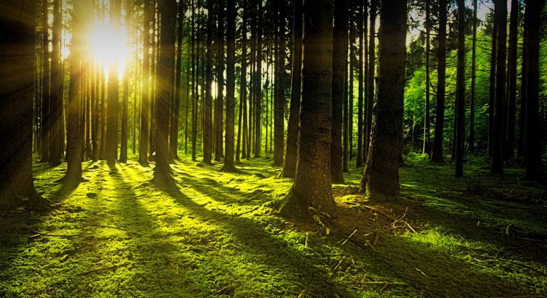 Global partnership for 1,000 billion trees
