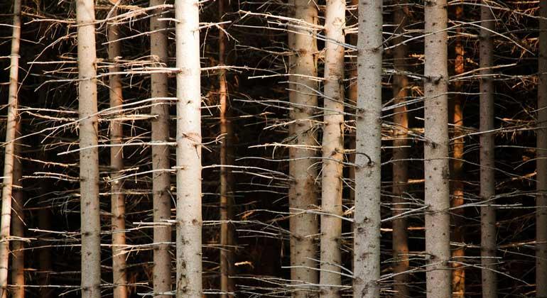 Die Zukunft des Waldes wird karger