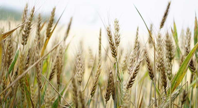 Hungerbekämpfung und Klimaschutz bilden ein Duett – kein Duell