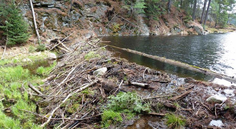 Alfred-Wegener-Institut, Ingmar Nitze | Biber Damm Algonquin Provincial Park (Kanada)