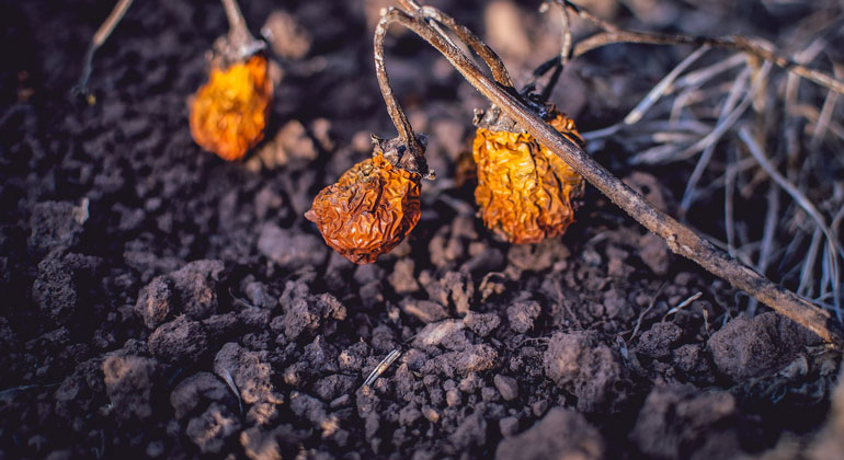 Brasilien: Noch viele schmutzige Agrar-Exporte