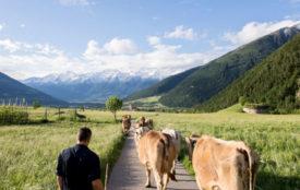 Euronatur | AlexFilz | Kleinbäuerliche Idylle vor Alpenpanorama. Die Mehrheit der Menschen in Mals wünscht sich eine derartige Form der Landwirtschaft.