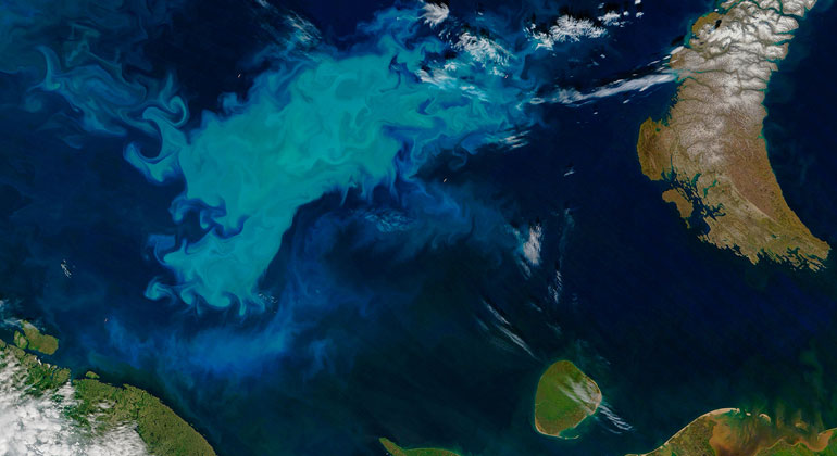 Jeff Schmaltz and Joshua Stevens, LANCE/EOSDIS Rapid Response, NASA | A phytoplankton bloom in the Barents Sea turned surface waters a milky blue in July 2016.