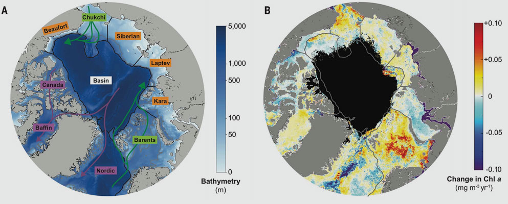 Kate Lewis. Data source: NASA | The left image shows the Arctic Ocean with its shelf seas and basin. Green arrows indicate inflow currents; purple arrows indicate outflow currents. The right image shows the rate of change in chlorophyll in the Arctic Ocean between 1998 and 2018, measured in milligrams per cubic meter per year. Gray lines outline subregions. Black pixels indicate no data.