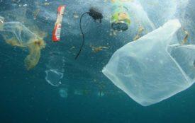 Fotolia.com | RichardCarey | Etwa 10 Millionen Tonnen Plastik landen jedes Jahr im Meer und haben dort katastrophale Folgen für das Meeresökosystem. Riesige Müllstrudel haben sich gebildet, da Plastik sich in der Regel erst nach mehreren Jahrhunderten abbaut.