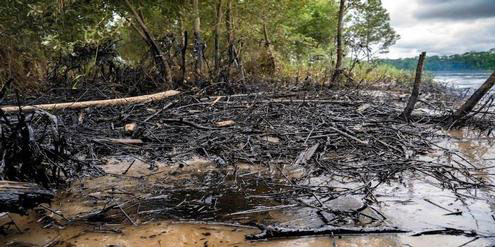 infosperber.ch | Telmo Ibarburu/mutantia.ch | Erdöl verschmutzt die Ufer des Rio Coca, Anfang April 2020