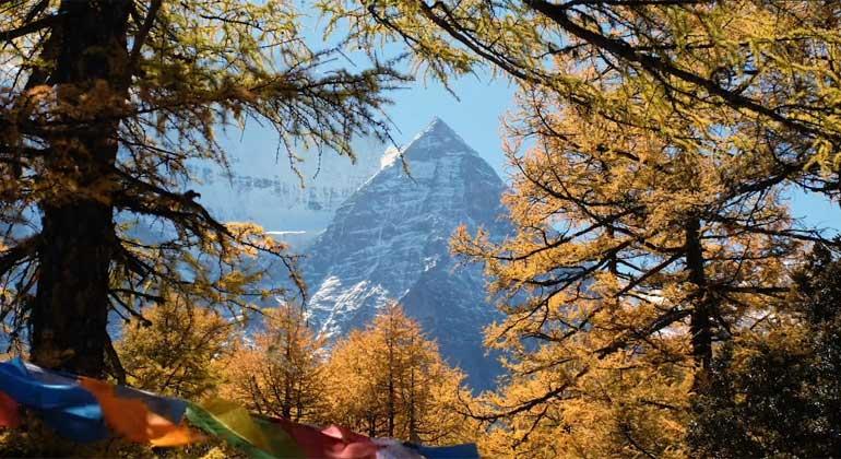 peacejam.org/the-dalai-lama-scientist | Screenshot