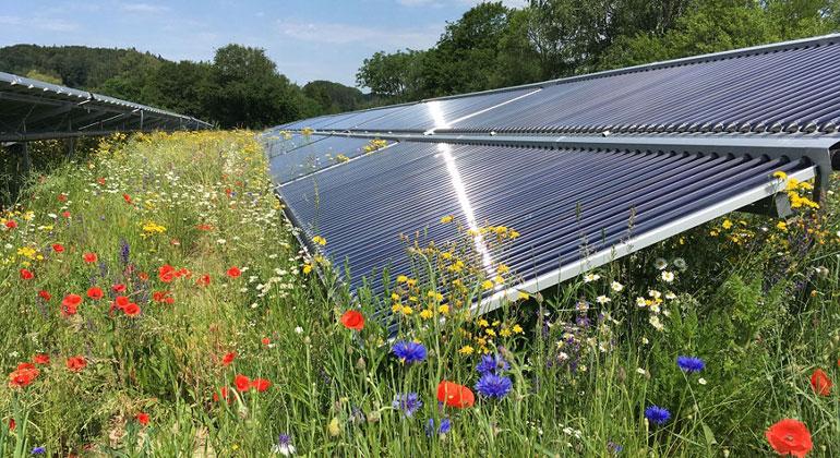 Solare Wärme begünstigt auch die Artenvielfalt