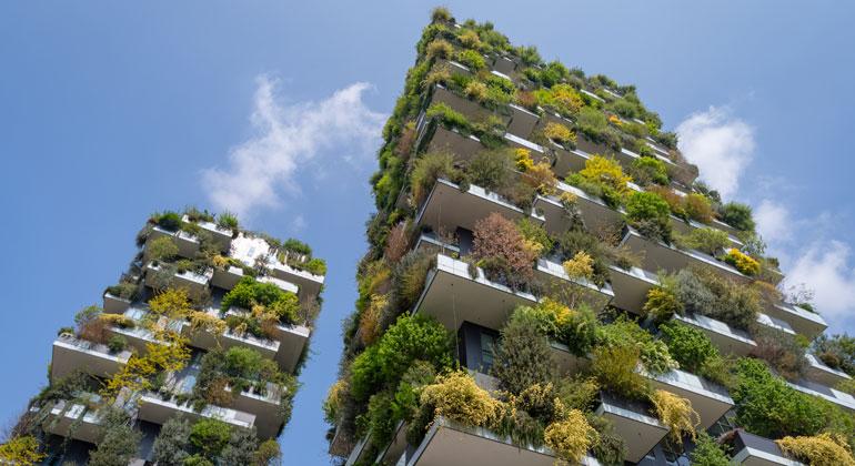 Bäume auf die Dächer – Wälder in die Stadt