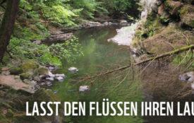 WWF | Sigrun Lange | Der Blick auf die deutschen Flüsse ist ernüchternd: 36 Prozent der Süßwasserfischarten in Deutschland gelten als bestandsgefährdet oder bereits ausgestorben.