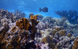Lisa Röpke/ ZMT | Healthy coral reef in Blue Bay, Curaçao, Caribbean