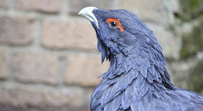 Heimliche Vögel in wilder Natur in Not