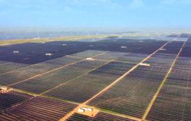 Sungrow | Sungrow lieferte die Wechselrichter für den riesigen Solarpark.
