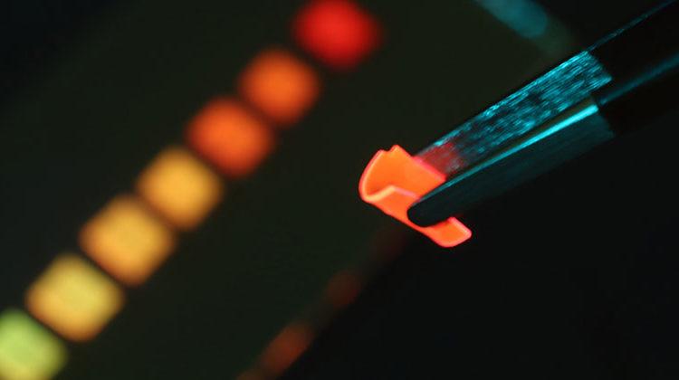 EMPA | Der neu entwickelte Solarkonzentrator bei Bestrahlung mit blauem LED-Licht: Das Polymer-Material ist so flexibel, dass es sich mit einer Pinzette biegen lässt.