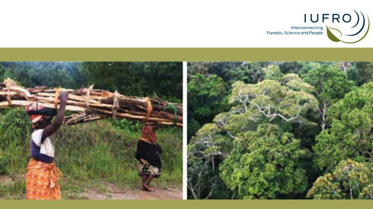 IUFRO | Eine Kernbotschaft des globalen Wissenschaftsberichts ist somit, dass die Armen selten die HauptnutznießerInnen der Güter, die Wälder und Bäume bieten, sind, auch wenn diese für den Erhalt ihrer Lebensgrundlage unverzichtbar sind.