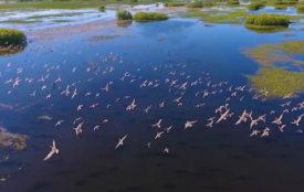 ARD | SWR | Die Story im Ersten | Das große Artensterben
