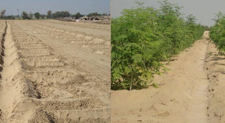 Wachstumswunder in der Wüste