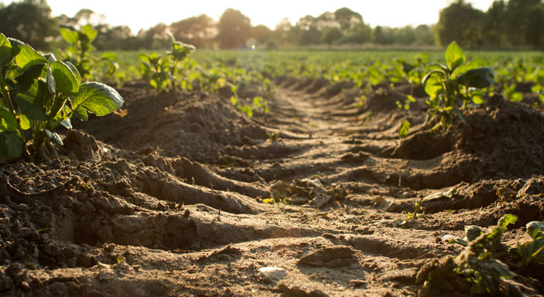 Warming of 2°C would release billions of tonnes of soil carbon