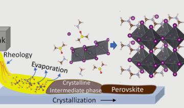 HZB | Schematische Darstellung: Aus der Tinte bildet sich über Zwischenphasen eine polykristalline Perowskit-Dünnschicht.