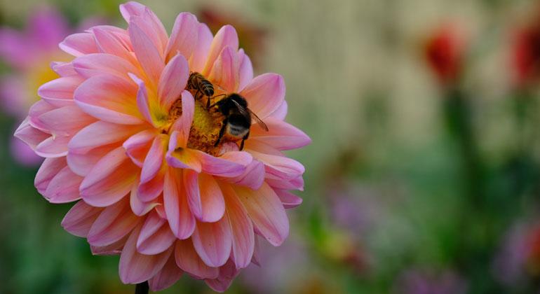 Insekten: Ökonomischer Nutzen vermutlich weit höher als angenommen