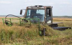 Universität Greifswald | Ernte von Moorpflanzen im Peenetal
