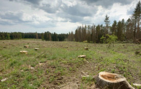 WWF.at |Matthias Schickhofer | Auswirkung intensiver Forstwirtschaft