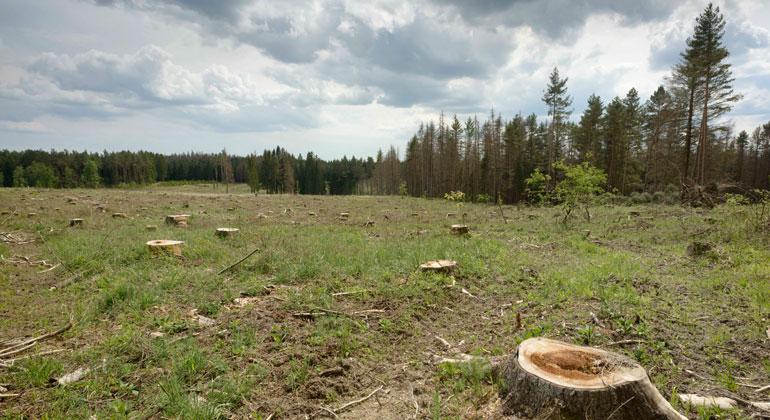 WWF.at  Matthias Schickhofer   Auswirkung intensiver Forstwirtschaft