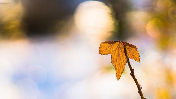 pixabay.com | Arek Socha | Herbstblatt