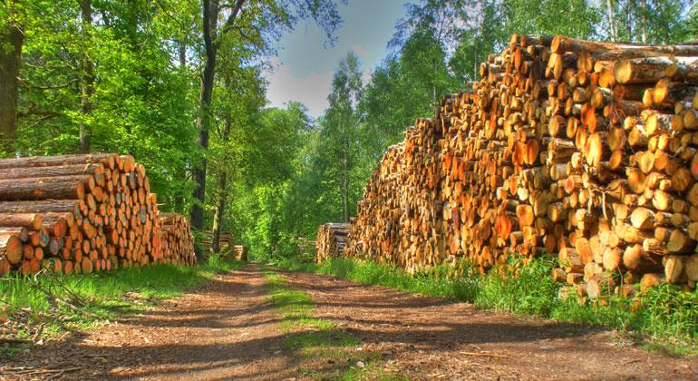 Energie aus Holz ist kein Klimaschutz