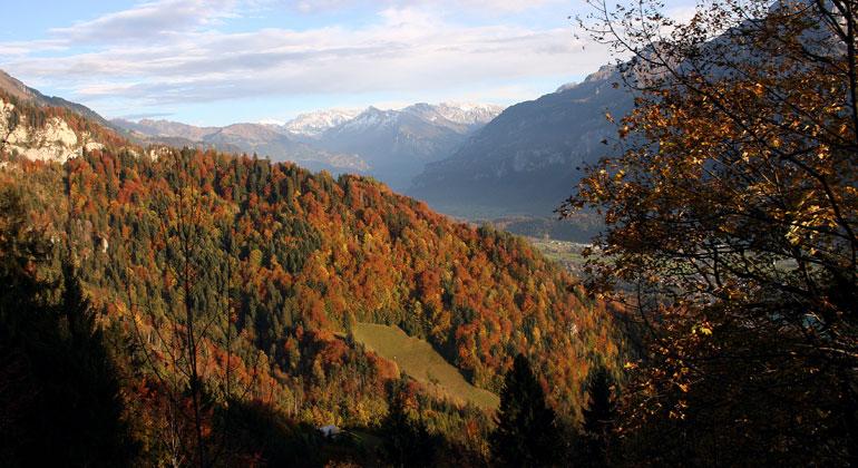 Lokal angepasste Konzepte für die Vielfalt der Waldbewirtschaftung in Europa