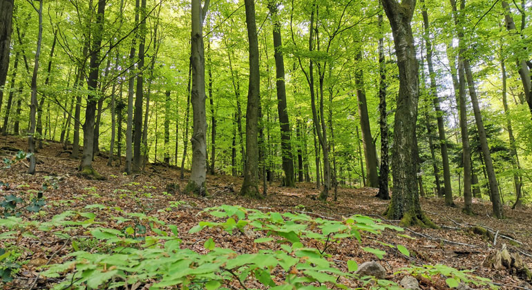 Cost of Planting, Protecting Trees to Fight Climate Change Could Jump
