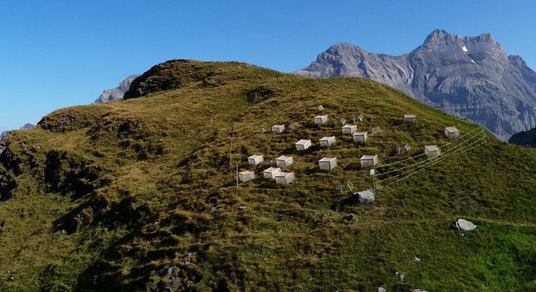 wsl.ch   Patrice Descombes   Forschungsstandort Paneirosse auf 2270 m in der Region Chablais. Im Hintergrund, Blick auf den Gipfel des Les Diablerets.