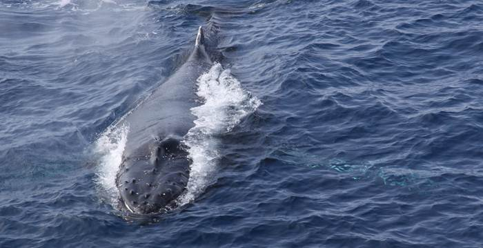 The Marine Soundscape and Anthropogenic Noise
