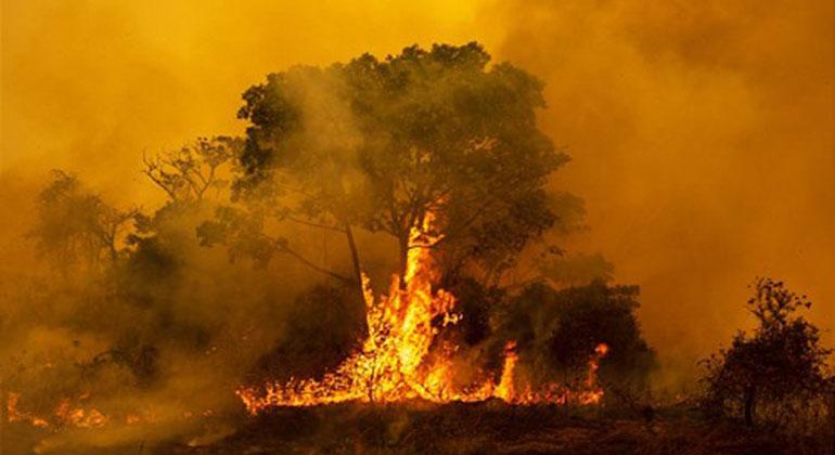 Global Nature Fund (GNF)   Fundação Ecotrópica