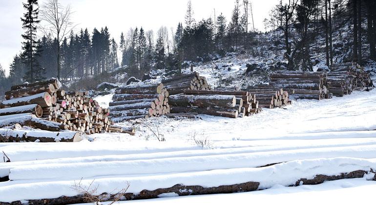 Großteil des Holzes in Europa wird verbrannt