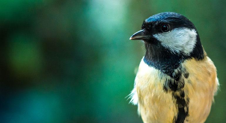 Jetzt sind Singvögel im Hormonrausch