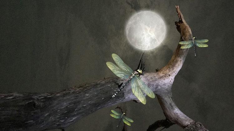 pixabay.com | Briam-Cute | Insekten