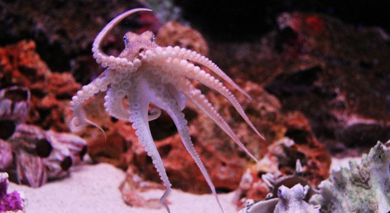 """""""Der neunte Arm des Oktopus"""""""