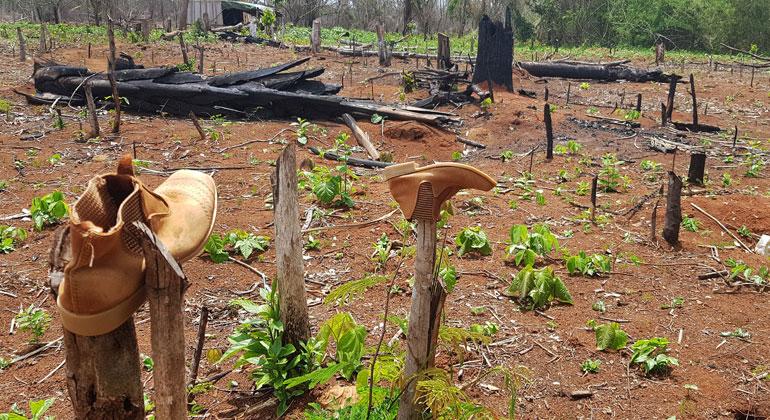SWR.de | Betroffen von Brandrodungen sind nicht nur Urwälder, auch indigene Schutzgebiete oder kleinbäuerliche Siedlungen werden durch mutwillig gelegte Brände zerstört.