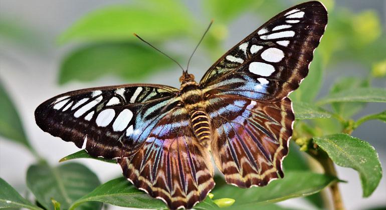 pixabay.com | Capri23auto | Schmetterling
