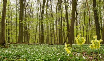Umweltbundesamt | Susanne Kambor | Wald