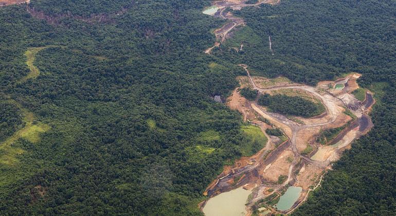 Die Waldzerstörungs-Weltrangliste: EU auf Platz zwei der Regenwaldvernichter