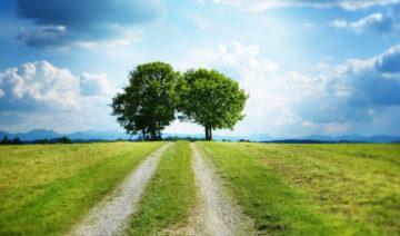 pixabay.com | silviarita | Weg Bäume