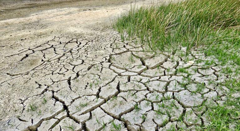 Grünbewuchs beeinflusst den Klimawandel
